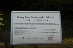 Green Legacy Hiroshima photo